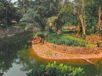 Kendang Harimau Kebun Binatang Ragunan