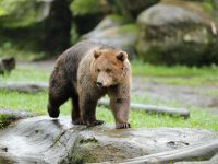 Paket Wisata Taman Safari Bogor